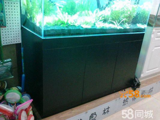 鱼缸彩色简笔画