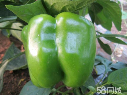 蔬菜水果手工制作图片茄子乌龟